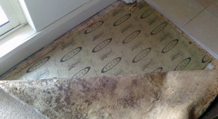 carpet mold from water damage