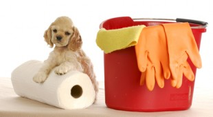 odor from pet urine on carpets